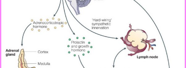 Stress response and the immune system_1.jpg