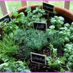 GROWING YOUR OWN HERBS_15.jpg