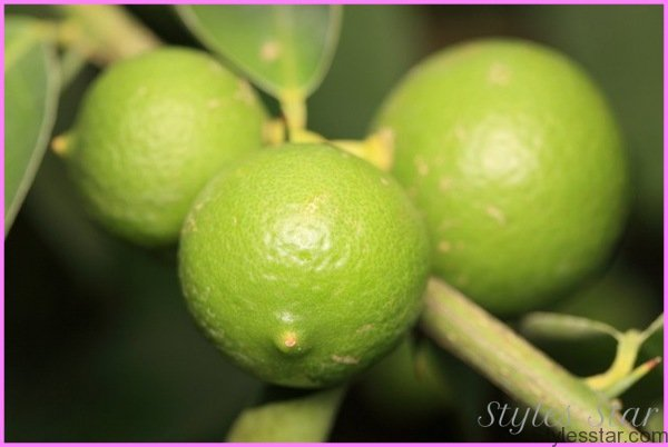 Benefits Of: MEXICAN LIME, KEY LIME_11.jpg