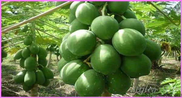 Benefits Of: MOUNTAIN PAPAYA_0.jpg
